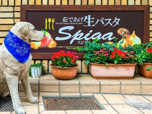 パスタの店 SPIGA(スピガ) 飯田橋店